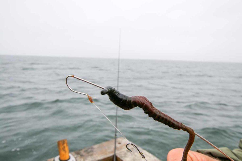 Schritt 2: Ziehen Sie dann den Wurm wie gehabt auf die Mundschnur. Foto: F. Pippardt