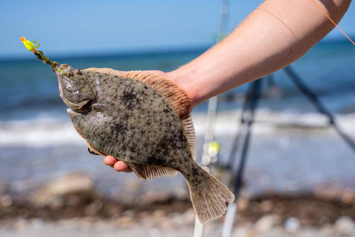 Der Fjord um Thyborøn ist ein exzellentes Revier für Plattfisch und Dorsch. Im Sommer kommen spannende Arten wie Makrele und Wolfsbarsch hinzu. Foto: J. Radtke