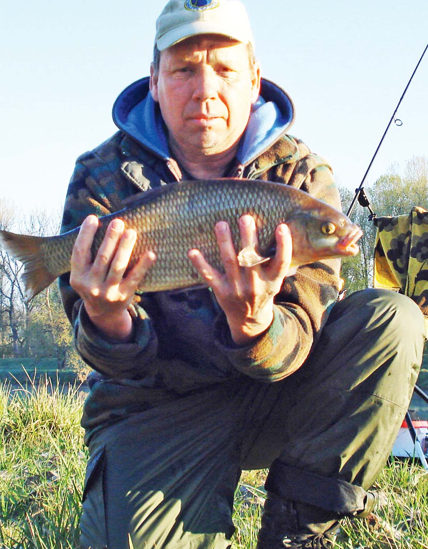 Aus der Donau bei Marxheim stammt der feiste Aland von Kamillo Schreck. Der dicke Fisch bis beim Feedern auf einem Kombi-Köder aus einem Maiskorn und angehängen Maden. Länge: 58 Zentimeter.