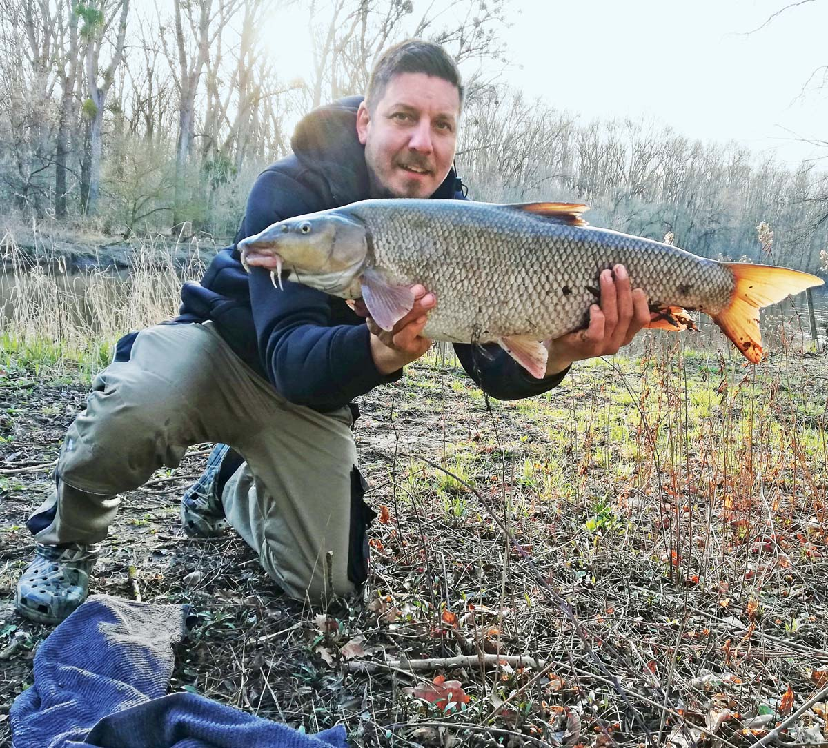 Die Thaya in Österreich war Tatort des gewaltigen Fanges von Thomas Ziegler. Auf einen Wurm ging ihm eine Barbe von 81 Zentimeter Länge und 14 Pfund Gewicht.