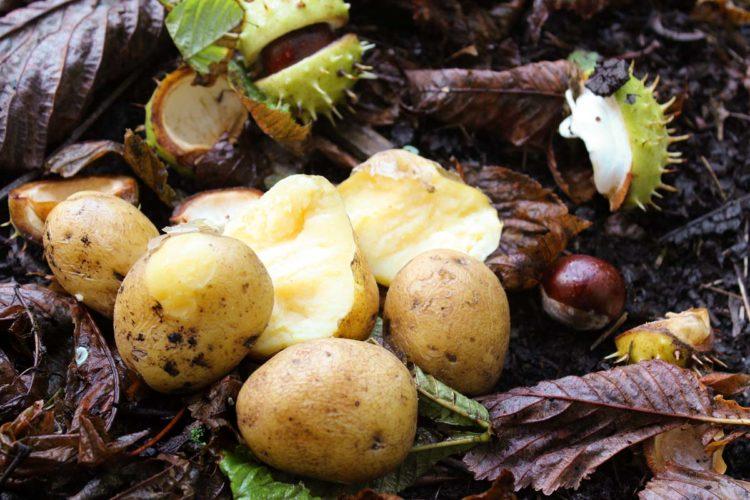 Kartoffeln - ein natürlicher und günstiger Köder.