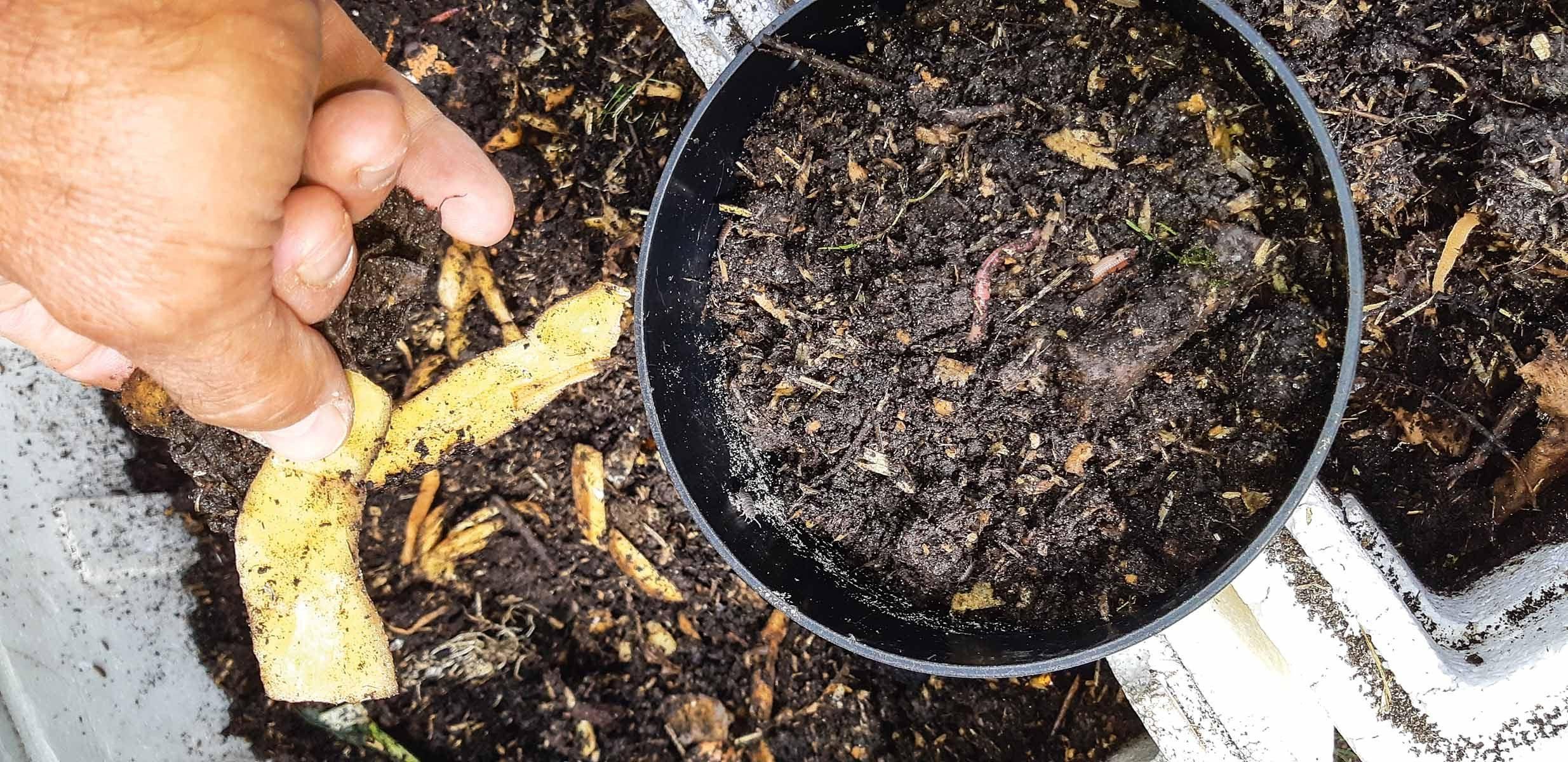 Eine Ladung Wurmsubstrat mit Würmern wird entnommen. Grobe Teile sortiert man aus. Foto: T. Pruß