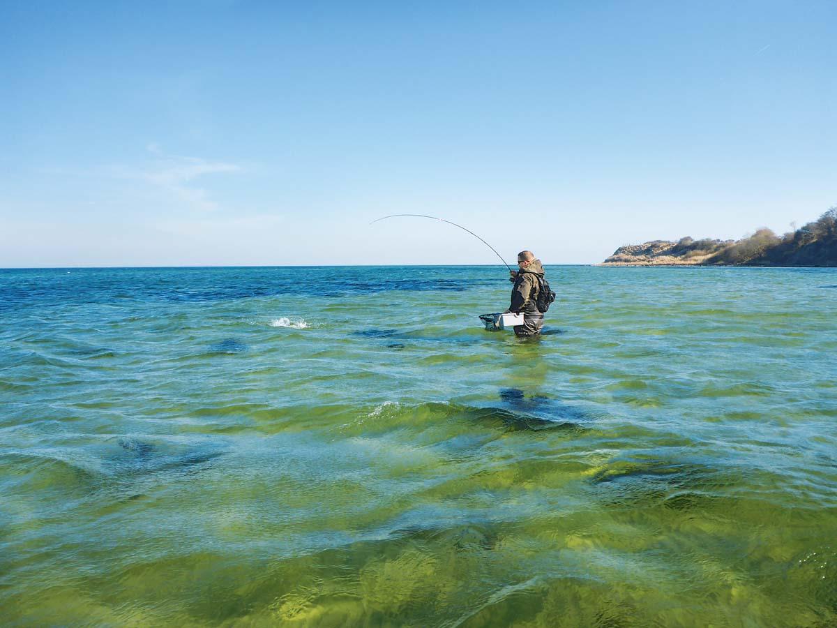 """Stark """"angestaubtes"""" Wasser bietet der Meerforelle perfekte Bedingungen für die Jagd. Sie kommt nun ungesehen dicht genug für einen Sprintangriff an ihre Beute heran."""