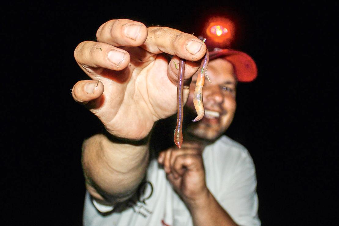 Wenn Sie nachts mit der Kopflampe Würmer suchen, dann können Sie diese lange in feuchtem Zeitungspapier lagern. Es darf nur nicht nass sein.