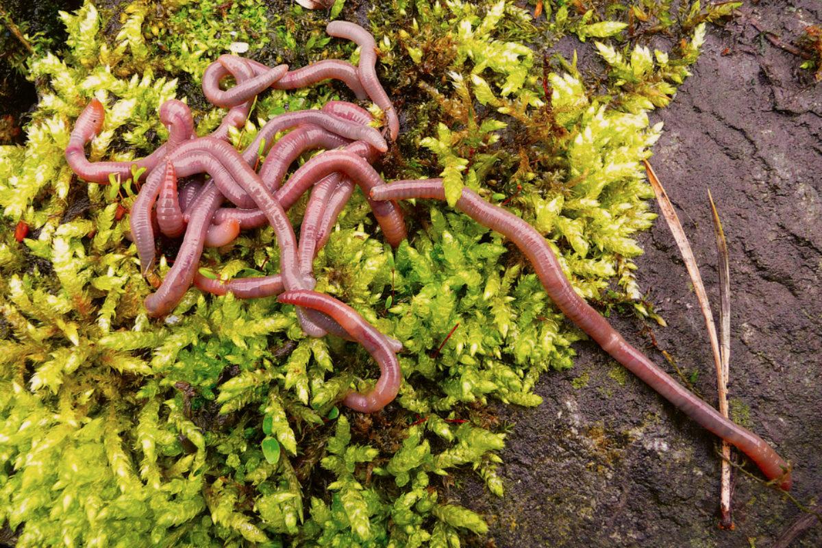 Würmer suchen und lagern ist nicht schwierig – wenn man auf einige wichtige Punkte achtet!