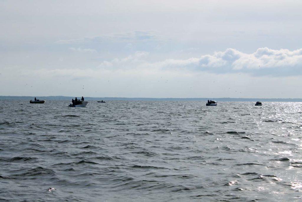 Zur besten Barschzeit ist ein Echolot fast nicht nötig - viele andere Angler markieren den Spot mit ihren Booten.