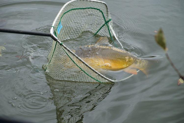 Während eines Angelturniers in England fing ein Angler insgesamt 400 Kilo an Fisch und stellte einen neuen Match-Rekord auf. (Symbolfoto) Foto: A. Pawlitzki