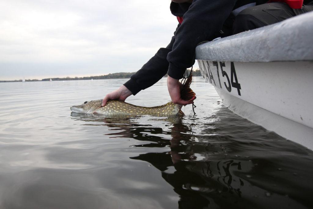 Catch & Release ist in Deutschland verboten, doch viele Angler scheinen damit unzufrieden zu sein.