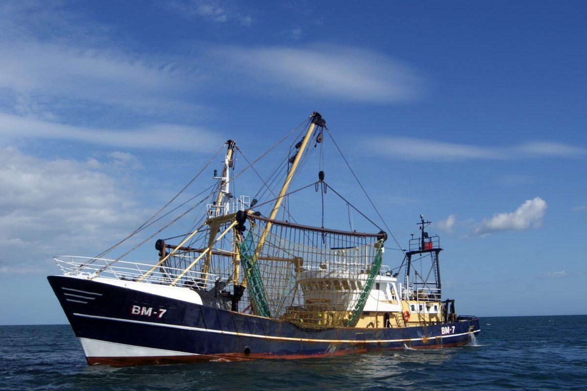 Trawler aus China fischen die afrikanische Küste vor Gambia leer, damit Lachse in norwegischen Zuchten gemästet werden können. (Symbolbild) Foto: Pixabay