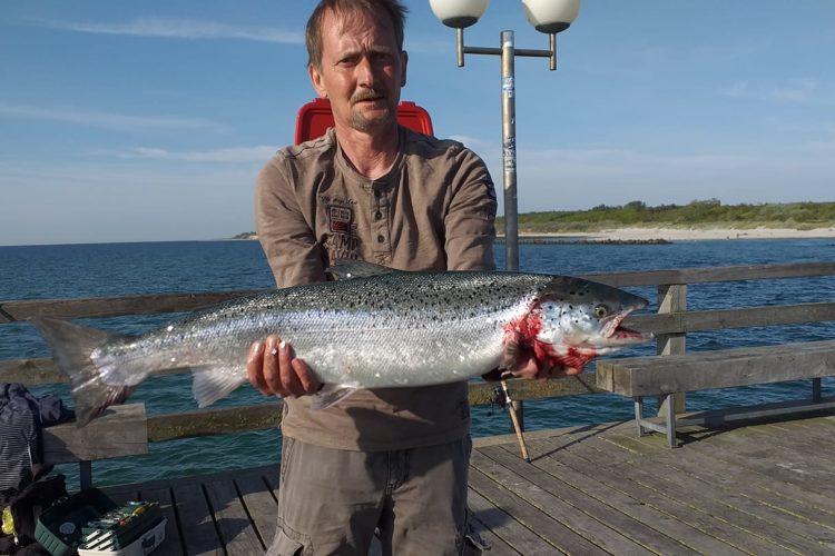 EIn Angler steht mit einer großen Meerforelle in der Hand auf der Seebrücke in Wustrow.