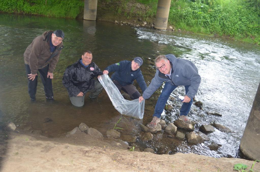 Angler und Hannovers Regionspräsident Hauke Jagau (rechts) beim auswildern von rund 200 bedrohte Quappen in der Leine.