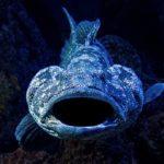 Wenn ein Riesenzackenbarsch (Goliath Grouper) zuschnappt, hat selbst ein Hai keine Chance. Foto: David Clode / Unsplash