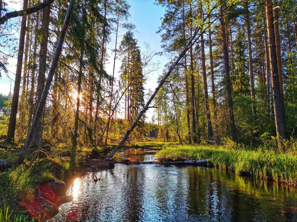 Ein Bach inmitten der schwedischen Natur.