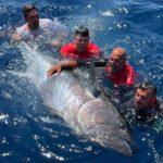 Ein massiver Fang gelang den Anglern vom Team Black Cat: Sie fingen einen 300 Kilogramm schweren Thunfisch vor Mallorca. Foto: Zebco Europe