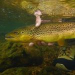 Ähnlich wie Menschen können auch Fische süchtig werden. In einem Experiment mit Drogen im Wasser konnten Wissenschaftler deutliche Verhaltensänderungen nachweisen. Foto: J. Radtke