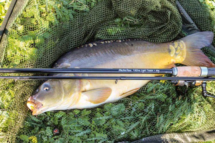 Karpfen wie dieser machen an der Masterpiece IM-12 Ultralight Feeder enormen Spaß. Allerdings gehören solche Fische zum Belastungs-Maximum der Rute. Foto: A. Pawlitzki