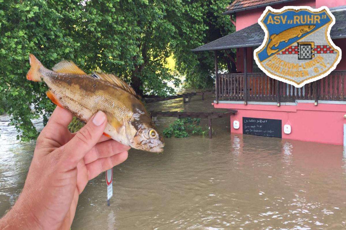 Das Vereinsheim des ASV Ruhr: Komplett unter Wasser. Etliche Fische verendeten durch die Flut.