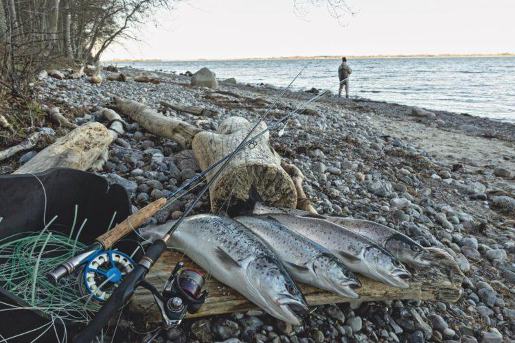 Zu viele Angler für immer weniger Meerforellen? Daten über den Meerforellen-Bestand in der Ostsee sind rar, doch der Trend ist mehr als spürbar. Foto: J. Radtke
