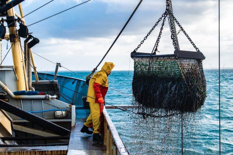 Auf einem industriellen Fischerboot wird ein Rundnetz aus dem Wasser gezogen. Norwegen verwehrt Großbritannien Fangrechte.
