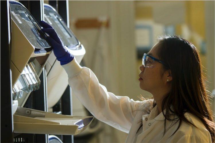 Wissenschaftler an der Universität in Kyoto arbeiten seit Jahren an der Veränderung des Genoms der roten Meerbrasse. Nun könnte der genmanipulierte Fisch bald in den Handel gelangen. Foto: Unsplash/CDC