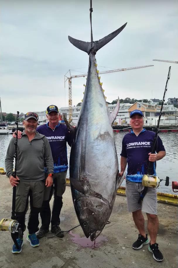 Thunfisch hängt in ganzer Länge zwischen den drei Fischern.