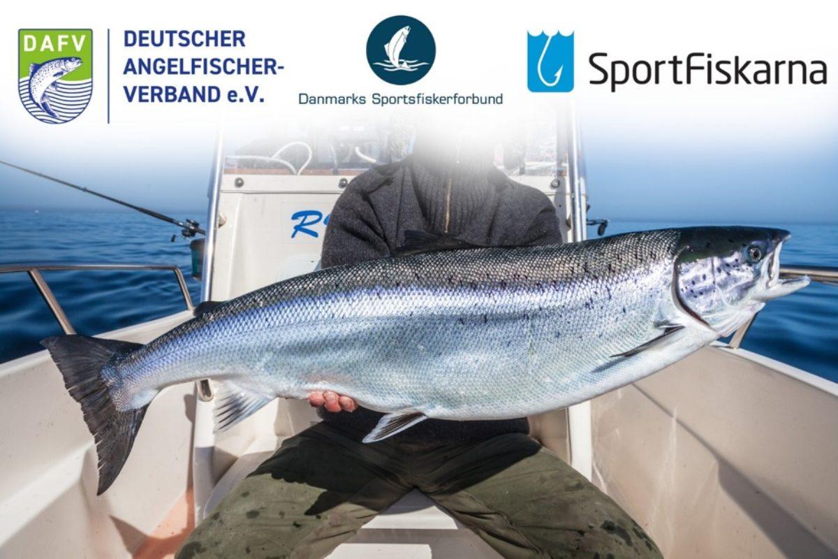 Der ICES empfiehlt ab 2022 ein fast vollständiges Angelverbot auf Lachs in der Ostsee. Der DAFV und benachbarte Angelverbände nehmen dazu Stellung. Foto: DAFV