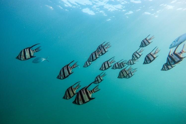 Nah an der Wasseroberfläche schwimmen ein paar Fische.
