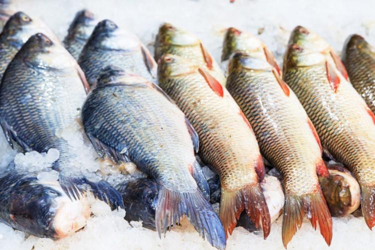 Gestapelte Fische auf Eis in einem Markt.