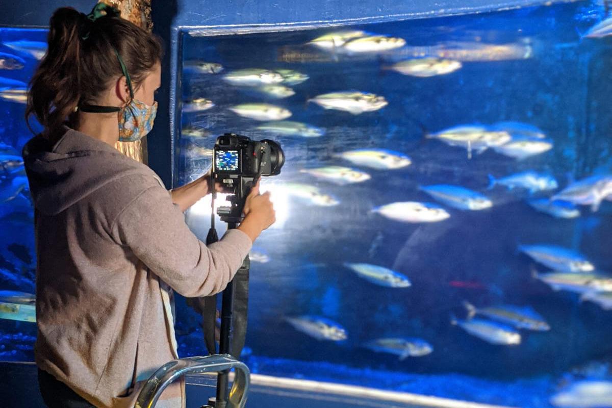 Wissenschaftlerin steht für einem Aquarium und filmt Makrelen.
